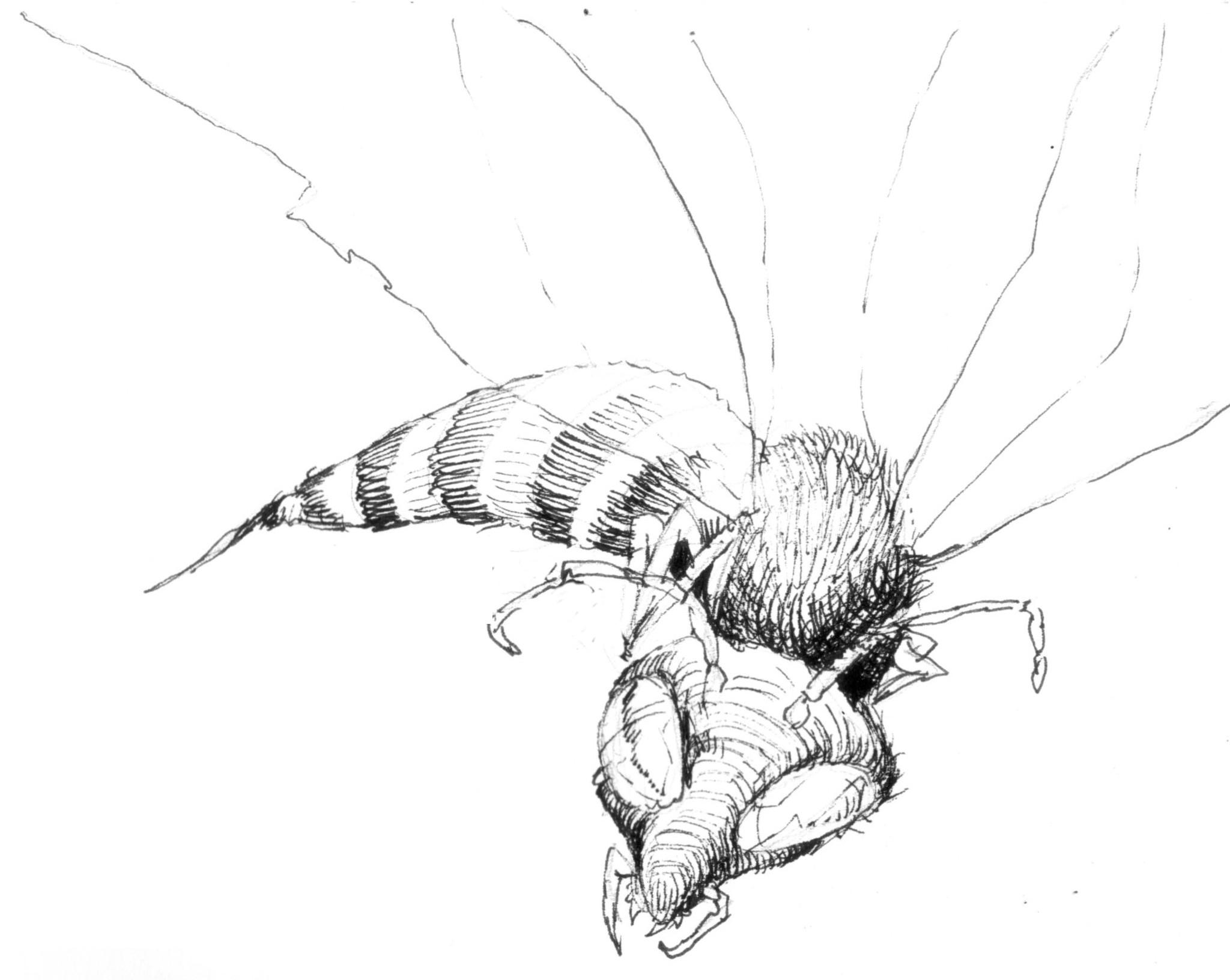 Der Totenschädel & die Spinnen...